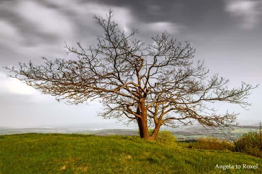 Landschaftsbilder kaufen: Tanz in den Mai: kahle Eiche (Quercus) auf dem Köterberg reckt ihre Äste wie zum Tanz | Ihr Kontakt: Angela to Roxel