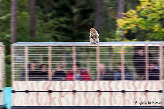 Entspannt reisen - Der Affenexpress im Safaripark Stukenbrock