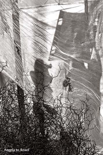 Fotografien kaufen: Fotografas - Frauen, die fotografieren, drei Fotografinnen, Silhouetten bei einem Shooting imTomatenzelt, Andalusien | A. to Roxel