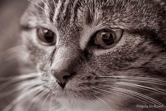 See me, Auge einer Katze, Makro, Spiegelung im Auge einer Katze, Porträt, monochrom | Ihr Kontakt: Angela to Roxel