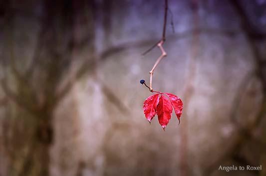 Wilder Wein, Ranke mit nur einem roten Blatt und einer blauen Beere auf einer verlassenen Terrasse im Herbst, Minimalismus - Holzminden, Niedersachsen