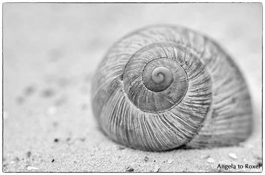 infinity 3, spiralförmiges Schneckenhaus im Sand, Fibonacci-Spirale, schwarz-weiß, monochrom, Highkey | Kontakt: A. to Roxel