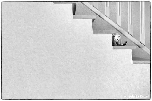Tierbilder kaufen: junger weißer Kater (Felis silvestris catus) sitzt auf einer Stufe im Treppenhaus, schwarzweiß | Ihr Kontakt: Angela to Roxel