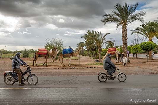 Fotografie Bilder kaufen: Straßenszene in Marrakesch, knatternde Mopeds und am Straßenrand parkende Kamele in Marrakesch, Marokko | Angela to Roxel