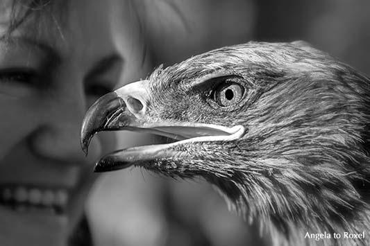Horus Falknerei: Kurgan, der Steppenadler (Aquila nipalensis), im Hintergrund die Falknerin, close-up, schwarzweiß, Hameln 2013 | Tierbilder