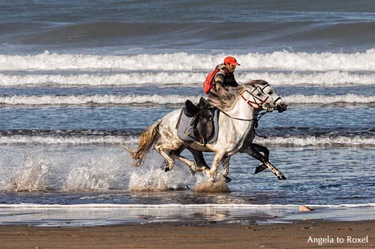 Reiter mit zwei galoppierenden Pferden am Strand von Essaouira