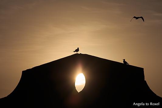 Drei Möwen (Larus michahellis) an der Hafenmauer der Festungsanlage Skala du Port bei Sonnenuntergang, Silhouette, Gegenlicht, Essaouira, Marokko 2013