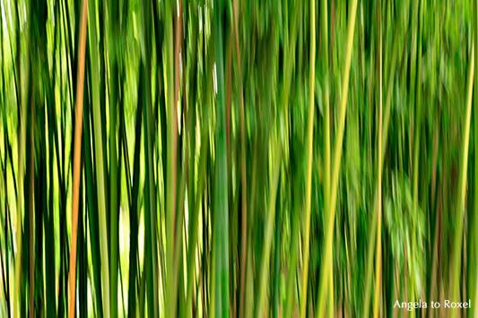 Bambus (Bambusoideae), Halme in einem Bambushain in Claude Monet's Garten, Langzeitbelichtung, Wischtechnik, Giverny - Frankreich 2012