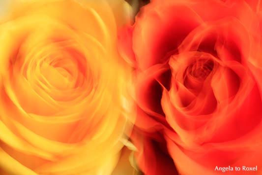 Fotografie: Zwei Rosen, gelb, orange, Langzeitbelichtung, Wischtechnik - Kunstfotografie kaufen | Ihr Kontakt: Angela to Roxel
