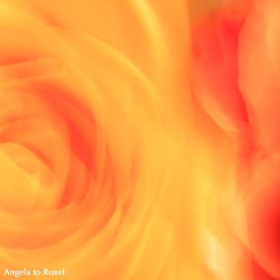 Zwei Rosen, Detail, gelb und orange, Wischtechnik