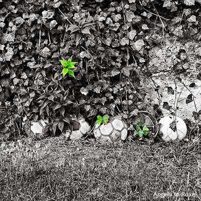 Fotografien kaufen: End of Childhood, fünf alte Fußbälle liegen nebeneinander vor einer Mauer, von Efeu bedeckt, Colorkey | Ihr Kontakt: A. to Roxel