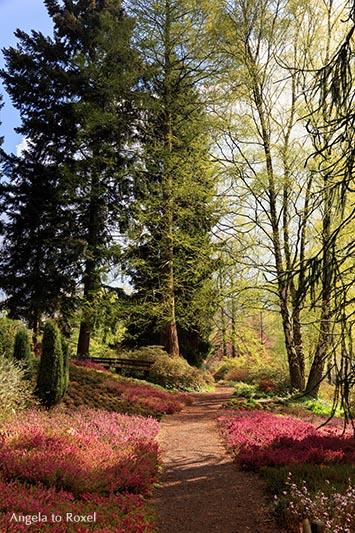 heidegarten-botanischer-garten-bielefeld-fruehling