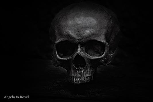Homo sapiens sapiens, Schädel, schwarzweiß, Low-key
