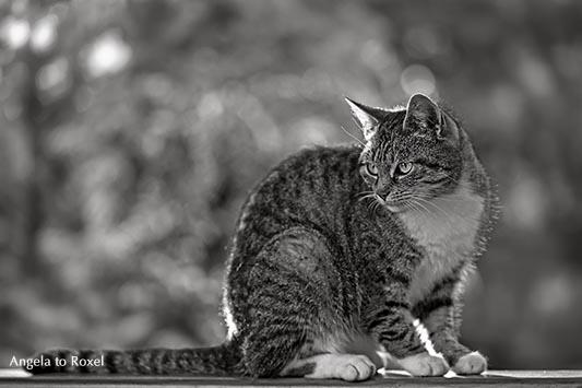 Monochromes Porträt einer Katze auf einem Geländer, schaut zur Seite, geringe Schärfentiefe, im Fokus die Augen - Höxter 2012