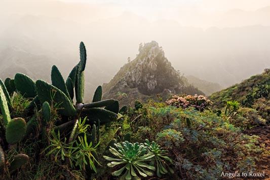 Vegetation im Anaga-Gebirge, im Hintergrund der Roque de los Pinos, Nebel, Lichtstimmung in Chinamada am Abend- Teneriffa 2015