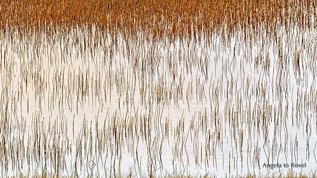 Fotografie: Like a fish, grass in a lake, Grashalme in einer überfluteten Wiese auf der Insel Magerøya, abstraktes Muster, Finnmark | Angela to Roxel