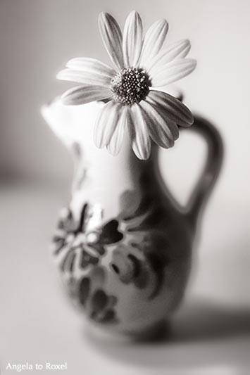 Blume, Wiesenblume in einer kleinen Vase, geringe Schärfentiefe, monochrom, analog | Ihr Kontakt: Angela to Roxel