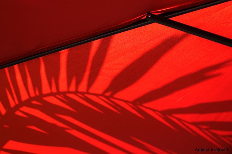 Kunstfotografie Kaufen le et le noir sunshade kunstfotografie kaufen