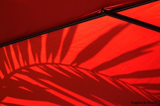 Kunstfotografie: Le Rouge et le Noir, sunshade, unter einem roten Sonnenschirm, Schatten einer Palme, rot und schwarz | Kontakt: A. to Roxel