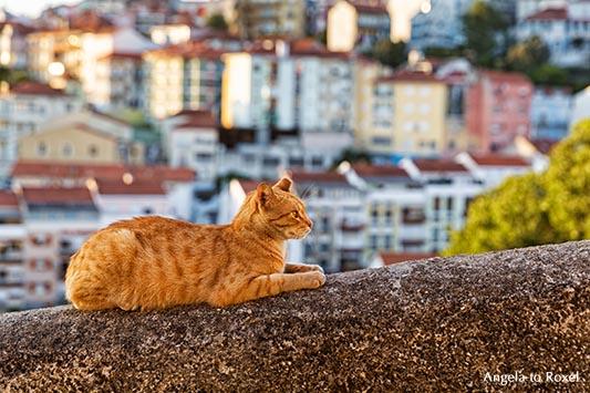 Katze in Coimbra, rote Katze auf der Altstadtmauer, Abendstimmung in Coimbra, Portugal | Ihr Kontakt: Angela to Roxel