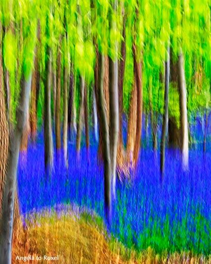 Landschaftsbilder kaufen: Hasenglöckchen (Hyacinthoides non-scripta), blau blühendes Atlantisches Hasenglöckchen, Hallerbos, Buchenwald, Wischtechnik