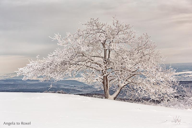 Eiche im Schnee, Weserbergland, Köterberg | Landschaftsbilder kaufen