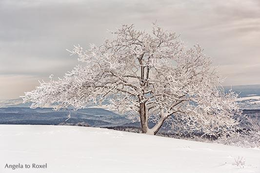 Landschaftsbild: Eiche (Quercus) im Schnee auf dem Köterberg, Winterlandschaft im Weserbergland, Lügde | Ihr Kontakt: Angela to Roxel