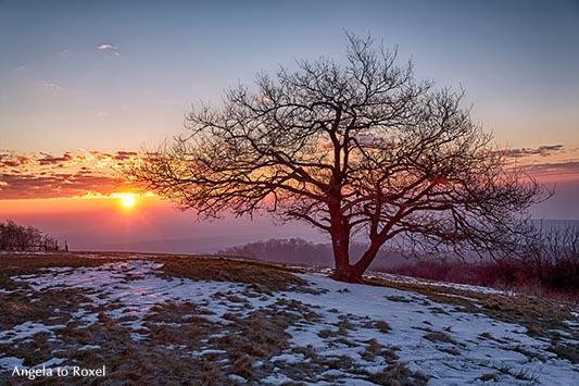 Kleine Eiche auf dem Köterberg bei Sonnenaufgang im Winter, Lügde, Weserbergland, Nordrhein-Westfalen