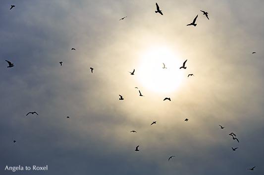 Kunstfotografie: Spirit of Nature - Möwenschwarm vor der Sonne, Wolkenhimmel kurz vor dem Regen, Gegenlicht | Ihr Kontakt: Angela to Roxel