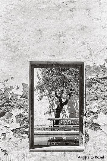 Fotografien kaufen: Baum im Innenhof der Bibliothek von Tavira. Durch das Fenster in einer Mauer sieht man einen Baum, schwarzweiß - Taviara, Algarve