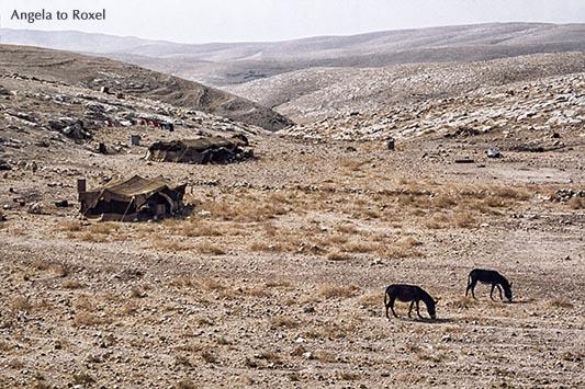 Beduinenzelte und zwei Esel in der West Bank - Palästina 1980