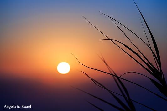 Sonnenuntergang hinter Blättern am Strand von Nazaré, Lichtstimmung am Abend, Unschärfe, Gegenlicht - Portugal 2016