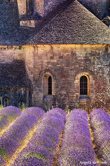 Fotografie: Abtei Notre-Dame von Senanque, Detail der romanischen Zisterzienserabtei mit blühenden Lavendelfeldern bei Gordes, Provence, Frankreich