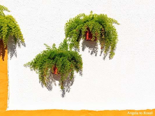 Blumentöpfe mit Grünpflanzen an einer gelb und weiß gestrichenen Hauswand, Cuevas del Almanzora, Almería | Angela to Roxel