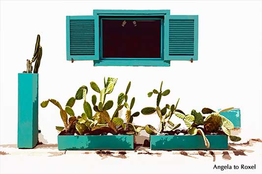 Opuntien (Opuntia) in Kübeln vor einer Hauswand in Las Negras, Cabo de Gata, Andalusien - Kunstfotografie kaufen | Ihr Kontakt: Angela to Roxel