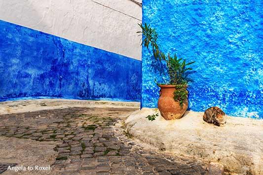 Blaue Wand mit Katze in den Gassen der Altstadt von Rabat, Kasbah des Oudaias, Marokko | Fotografien kaufen - Ihr Kontakt: Angela to Roxel