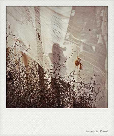 Polaroid-Aufnahme einer Frau, die fotografiert, Silhouette einer Fotografin hinter einem Schleier, Shooting in einem Tomatenzelt - Kontakt: Angela to Roxel