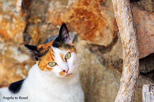 Glückskatze, dreifarbige Katze vor einer Mauer in Mojácar, schaut in die Kamera, Andalusien, Spanien | Tierbilder - Ihr Kontakt: Angela to Roxel